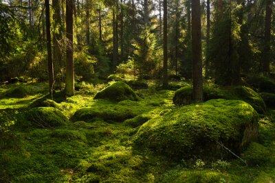 Fotomural Forest-1