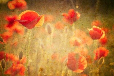 Fotomural Foto de flores de una amapola