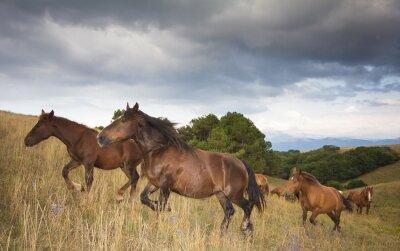 Fotomural Foto di cavalli al Galoppo