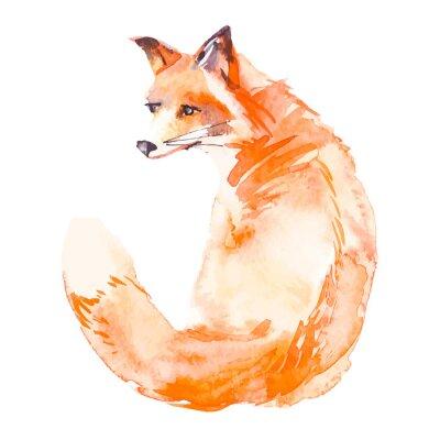Fotomural Fox aislado en el fondo blanco. Acuarela. .