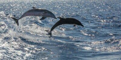 Fotomural frei Schwimmende Delfine vor Teneriffa