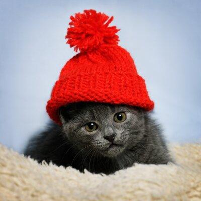 Fotomural Gatito en un sombrero rojo