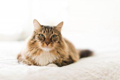 Fotomural Gato gris acostado en la cama