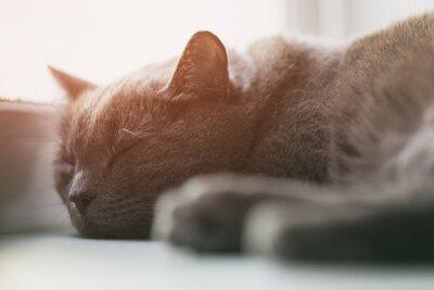 Fotomural Gato gris durmiendo en la ventana, vintage entonado