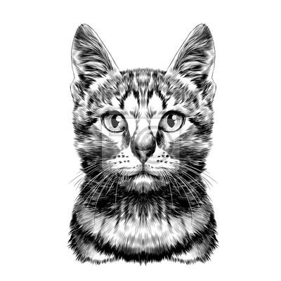 Gato Manchado Rayado Cabeza Simétrico Dibujo Vectoriales Gráficos