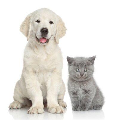 Fotomural Gato y perro juntos