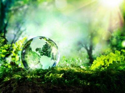 Fotomural globo de cristal en el musgo en un bosque - concepto de medio ambiente