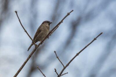 Fotomural Gorriones posándose en una rama.