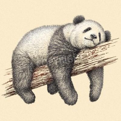Fotomural Grabar aislados panda oso ilustración dibujo. Arte lineal