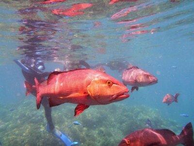 Fotomural Gran barrera de coral de peces