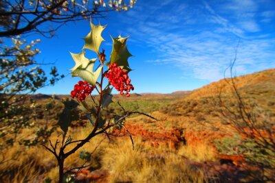 Fotomural Grevillea wickhamii en Trephina Gorge, Australia