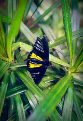 Fotomural Hermosa mariposa se sienta en una hoja grande