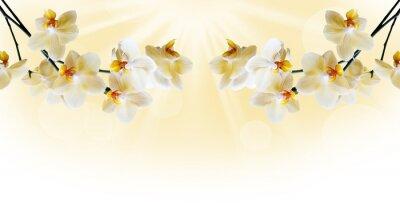 Fotomural Hermosa orquídea blanca