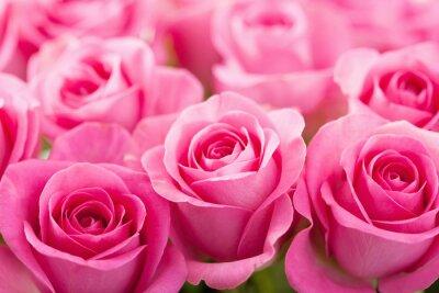 Fotomural hermosa rosa rosa flores de fondo