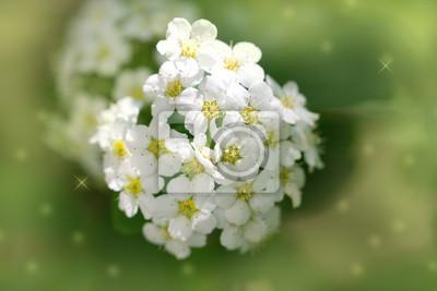 Hermosas Flores Blancas En La Naturaleza Macro Fotomural