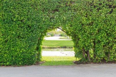 Fotomural Hermoso jardin