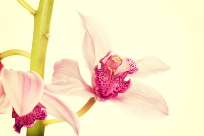 Fotomural Hermoso lirio rosa fresco.