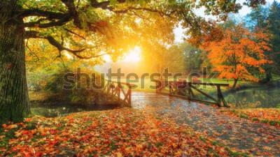 Fotomural Hermoso paisaje de otoño en el parque. Fotografía al aire libre a la luz del amanecer