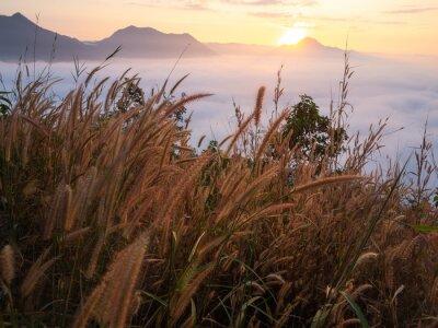 Fotomural Hermoso paisaje gran cantidad de niebla Phu Thok