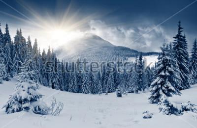 Fotomural Hermoso paisaje invernal con árboles nevados