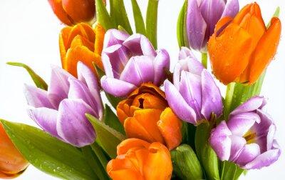 Fotomural Hermoso ramo de tulipanes púrpuras y rojas aisladas sobre fondo blanco