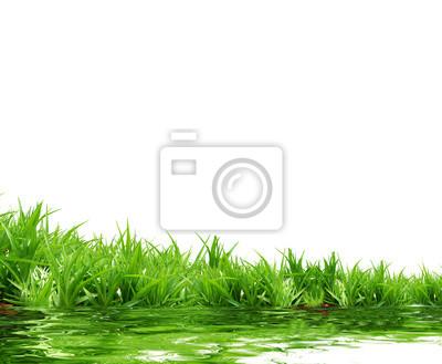Fotomural hierba