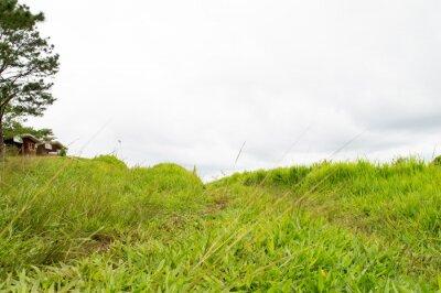 Fotomural hierba montaña