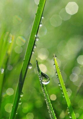 Fotomural Hierba verde fresca con gotas de rocío de cerca. Fondo de la naturaleza