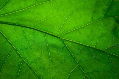 Fotomural Hoja verde
