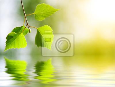 Fotomural hojas de abedul en el bosque profundo