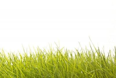 Fotomural Hojas de hierba
