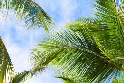 Fotomural Hojas de palmera de coco