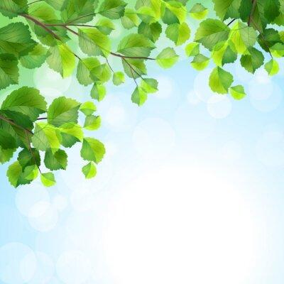 Fotomural Hojas verdes de fondo ramas de los árboles del vector