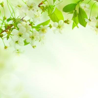 Fotomural Hojas verdes, hermosa naturaleza de fondo