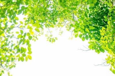 Fotomural Hojas verdes hermosas en el fondo blanco