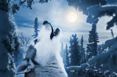Fotomural howling to the moon