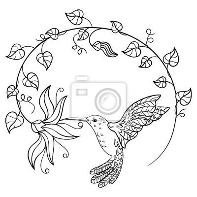 Hummingbird Beber El Néctar De Una Flor Un Colibrí Del Vuelo