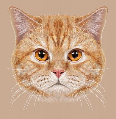 Fotomural Ilustración de pelo corto retrato británico gato. Naranja linda Gato doméstico con ojos de cobre.