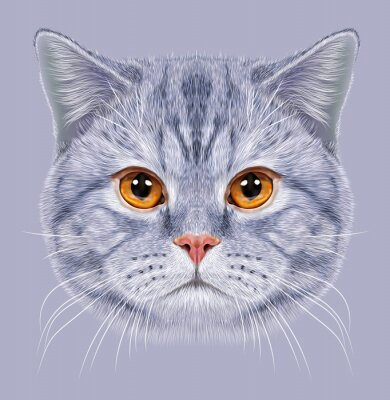 Fotomural Ilustración de pelo corto retrato británico gato. Tabby gris lindo Gato doméstico con los ojos anaranjados.