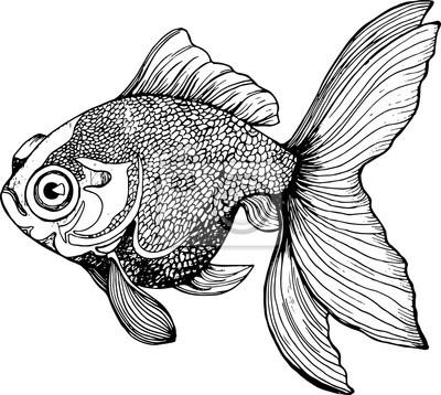 Ilustración De Un Pez Dibujo Blanco Y Negro De La Carpa Fotomural