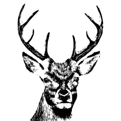 Fotomural ilustración de una cabeza de ciervo, grunge, silueta aislado en blanco