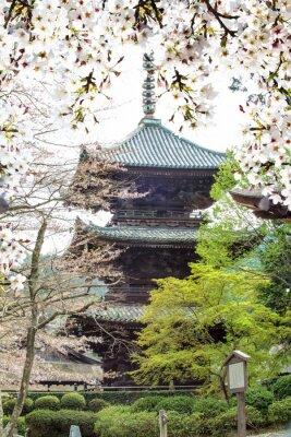 Fotomural Imagen de sakura seasnon hermosa en Kyoto, Japón