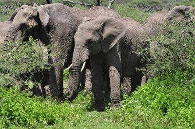 Fotomural Joven elefante africano en el rebaño