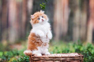 Fotomural Juguetón gatito mullido en el bosque
