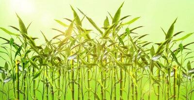 Fotomural Junge Bambuspflanzen vor grünem Hintergrund
