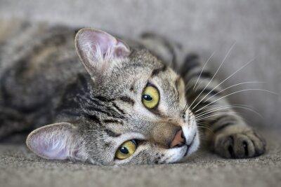 Fotomural kedi