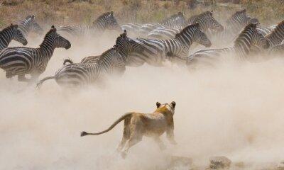Fotomural Kenia. Tanzania. Una excelente ilustración.