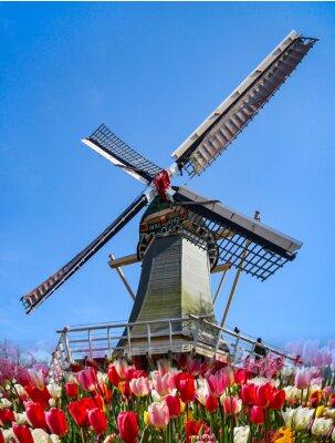 Fotomural Keukenhof - Holanda