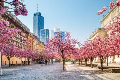 Fotomural Kirschbaumblüte en Frankfurt, Alemania