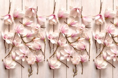 Fotomural kwiat magnolii, kwiat, roślina, biała, beuty, galąź, drzewo magnolii, kwiatowy, fiolet, kwitnienie, flora, botanika, ornament z magnolii, kompozycja magnolii, układ kwiatów magnolii, pąki magnolii, fl